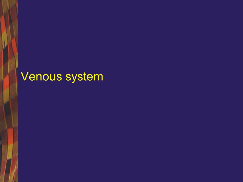 Venous system