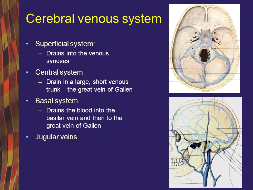 Cerebral venous system