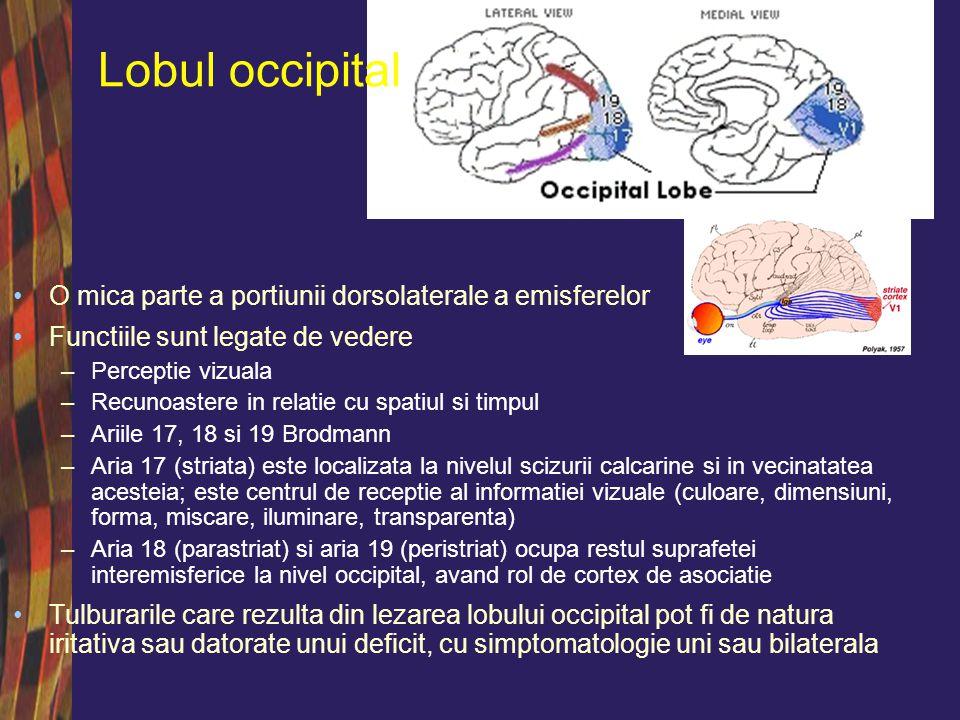 Lobul occipital O mica parte a portiunii dorsolaterale a emisferelor
