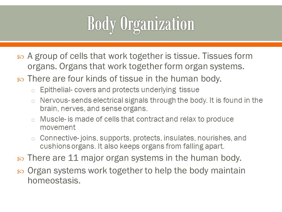 Body Organization A group of cells that work together is tissue. Tissues form organs. Organs that work together form organ systems.