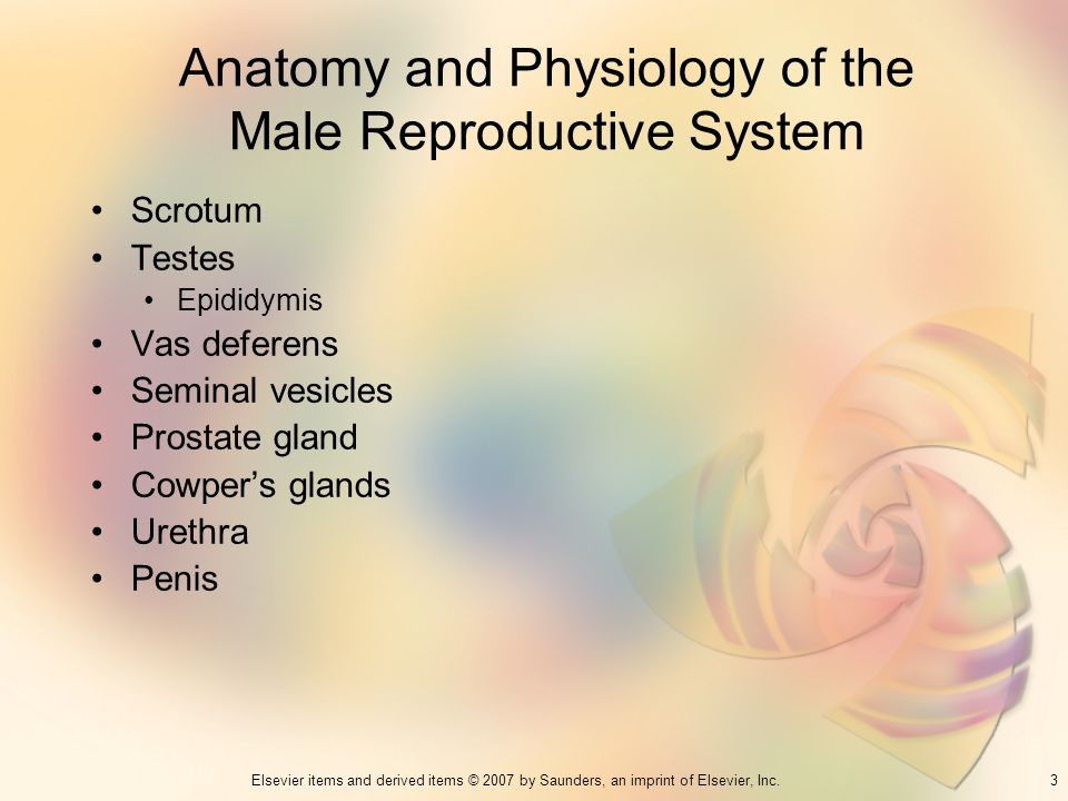 Anatomy and Physiology of the Male Reproductive System