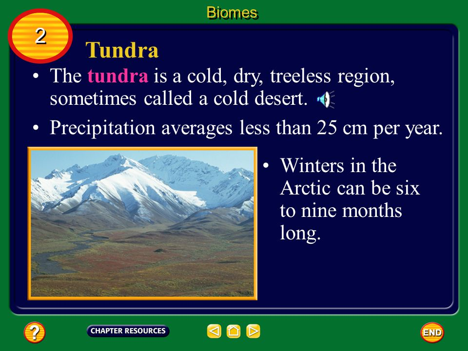 Biomes 2. Tundra. The tundra is a cold, dry, treeless region, sometimes called a cold desert. Precipitation averages less than 25 cm per year.