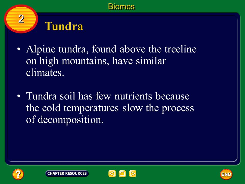 Biomes 2. Tundra. Alpine tundra, found above the treeline on high mountains, have similar climates.