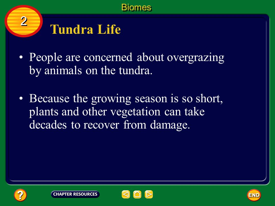 Biomes 2. Tundra Life. People are concerned about overgrazing by animals on the tundra.
