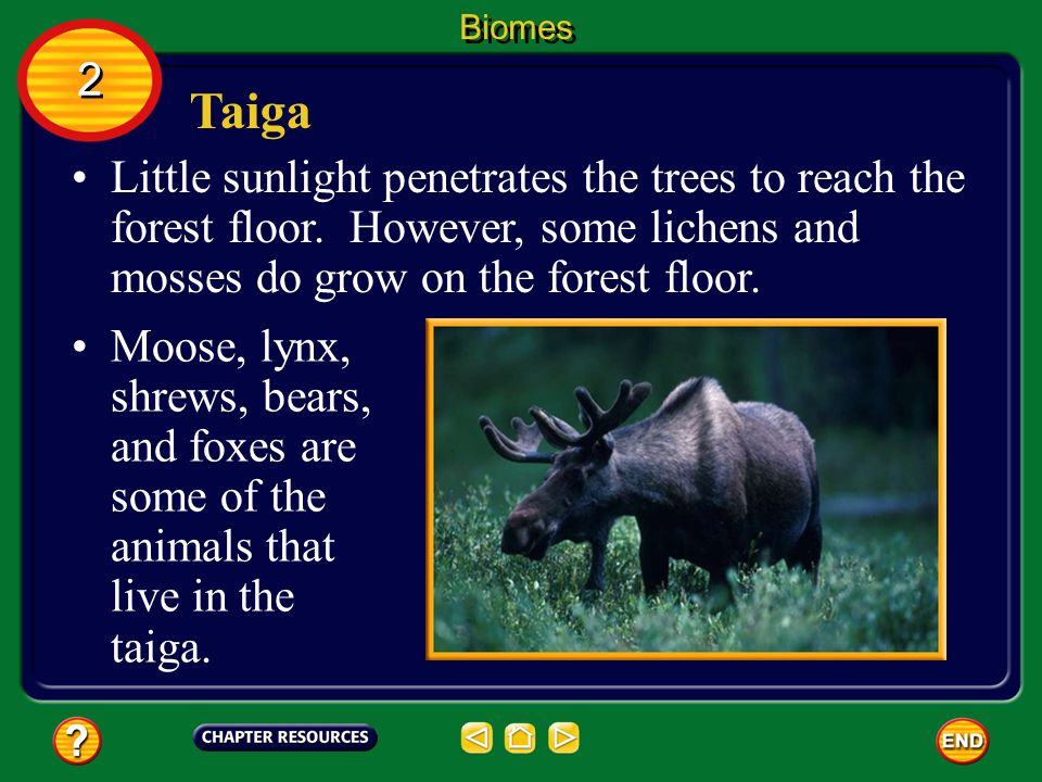 Biomes 2. Taiga. Little sunlight penetrates the trees to reach the forest floor. However, some lichens and mosses do grow on the forest floor.