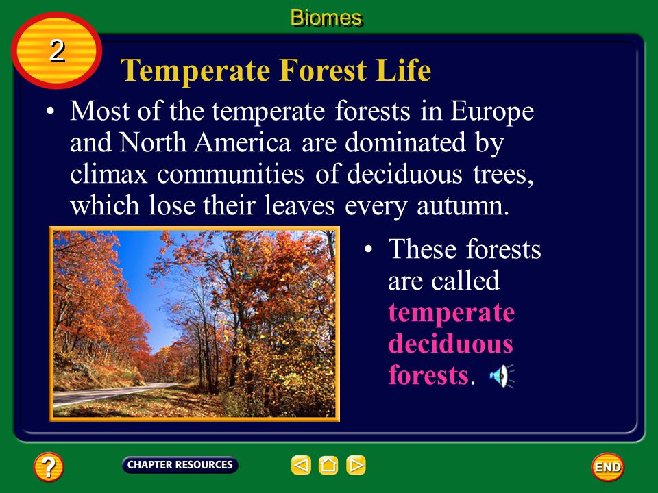 Biomes 2. Temperate Forest Life.