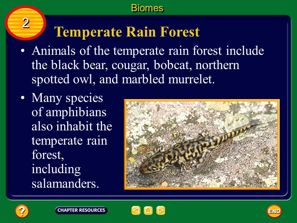 Biomes 2. Temperate Rain Forest.