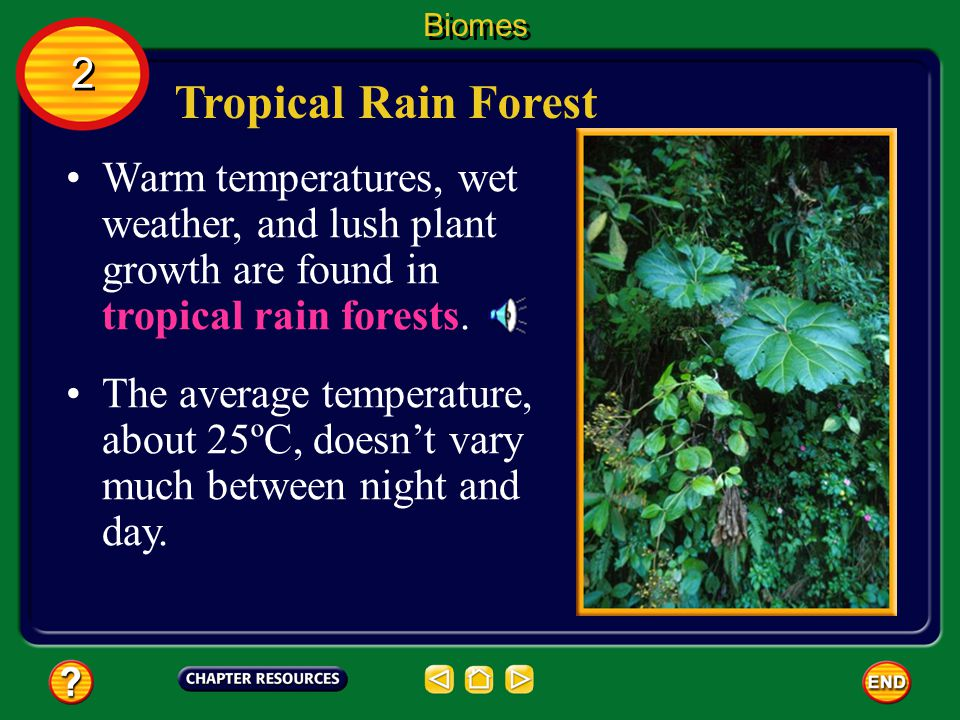 Biomes 2. Tropical Rain Forest. Warm temperatures, wet weather, and lush plant growth are found in tropical rain forests.