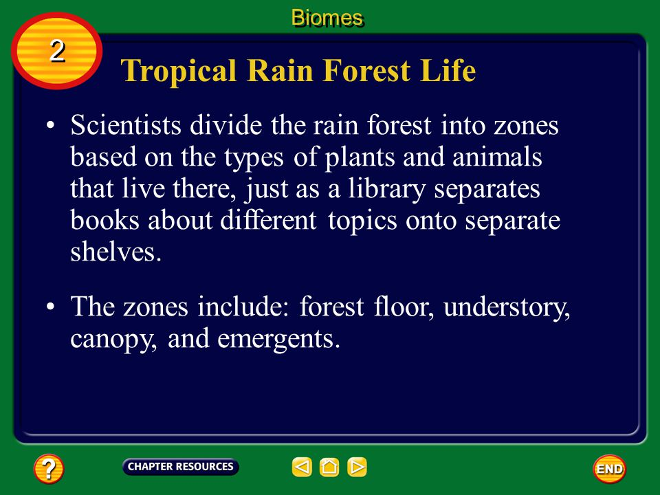 Tropical Rain Forest Life