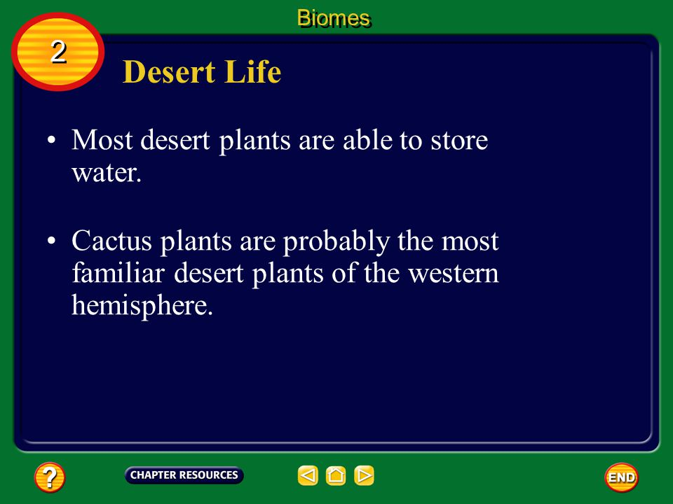 Desert Life 2 Most desert plants are able to store water.