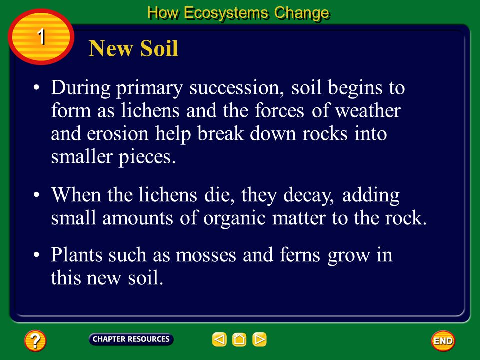 How Ecosystems Change 1. New Soil.