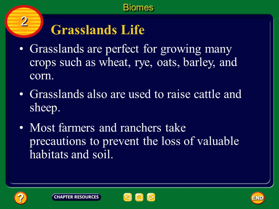 Biomes 2. Grasslands Life. Grasslands are perfect for growing many crops such as wheat, rye, oats, barley, and corn.