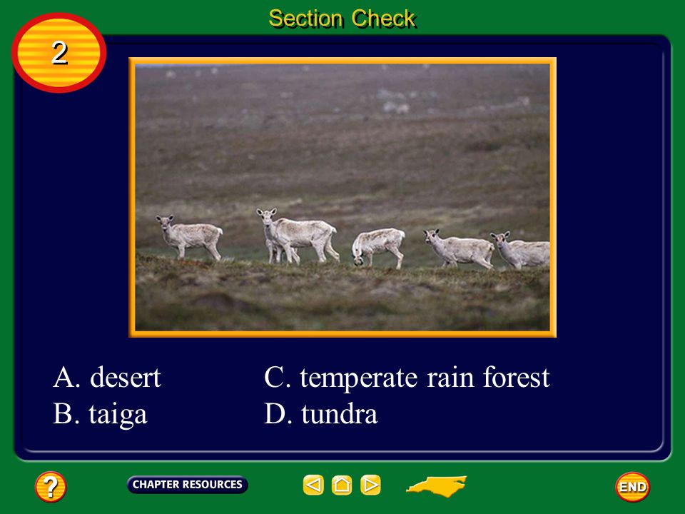 C. temperate rain forest D. tundra