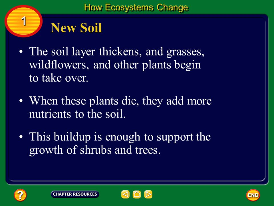 How Ecosystems Change 1. New Soil. The soil layer thickens, and grasses, wildflowers, and other plants begin to take over.