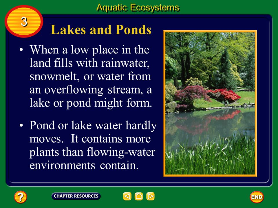 Aquatic Ecosystems 3. Lakes and Ponds.