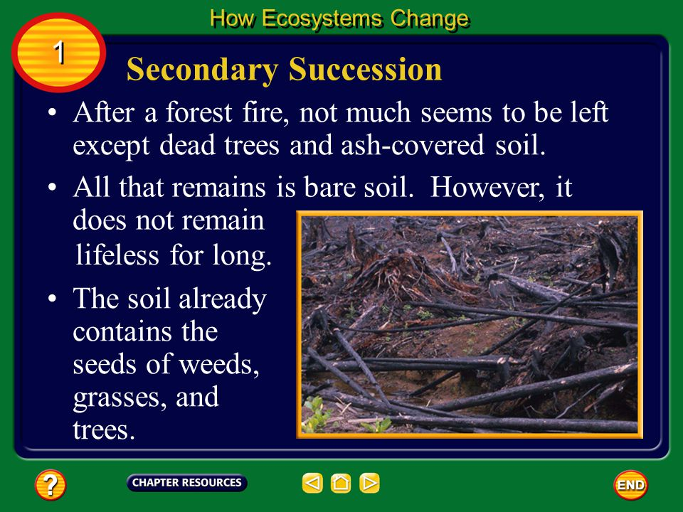 How Ecosystems Change 1. Secondary Succession. After a forest fire, not much seems to be left except dead trees and ash-covered soil.