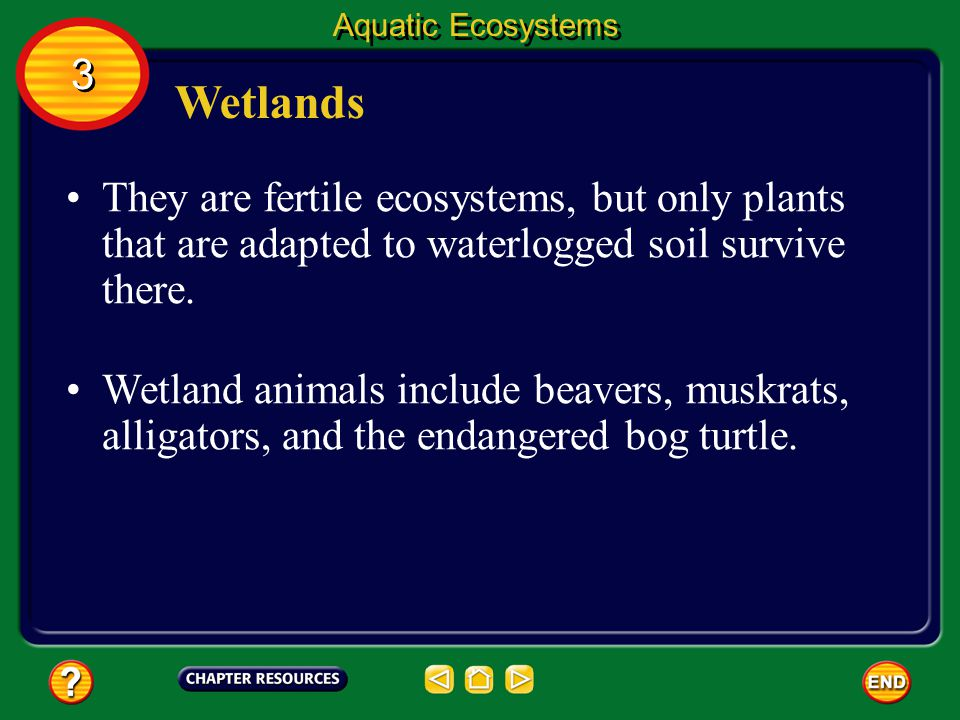 Aquatic Ecosystems 3. Wetlands. They are fertile ecosystems, but only plants that are adapted to waterlogged soil survive there.