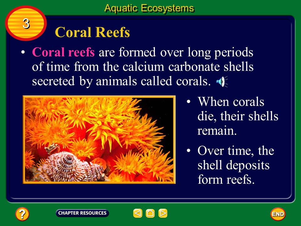 Aquatic Ecosystems 3. Coral Reefs.