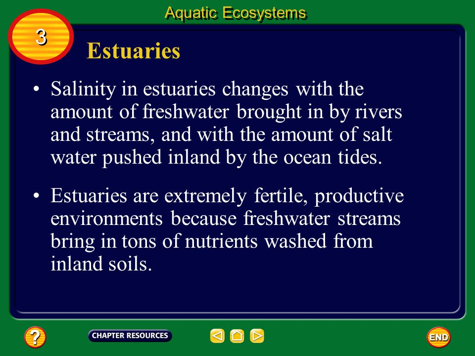 Aquatic Ecosystems 3. Estuaries.