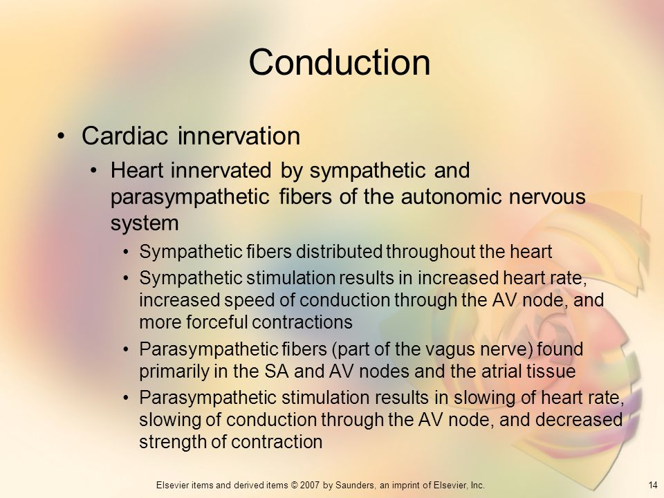 Conduction Cardiac innervation