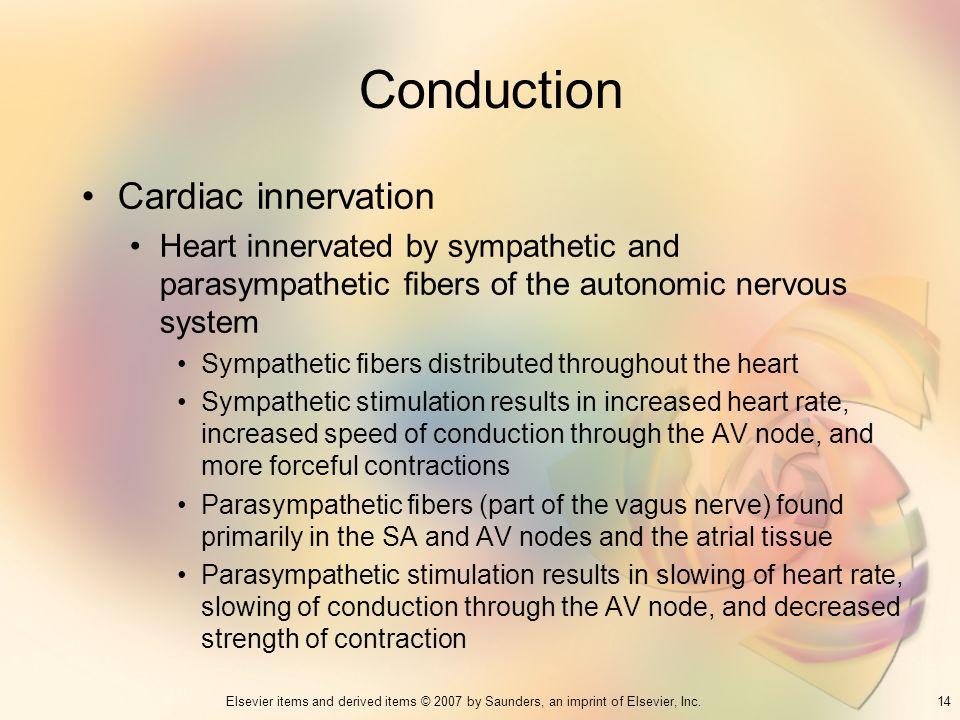 Conduction Cardiac innervation