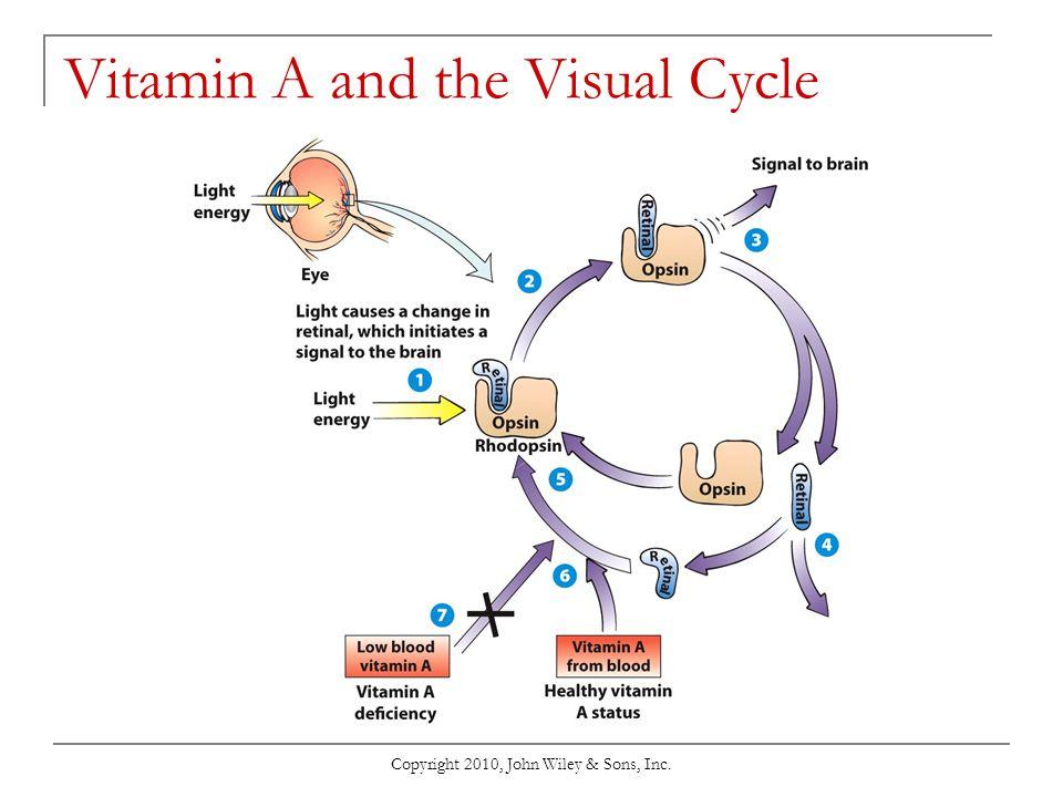Vitamin A and the Visual Cycle