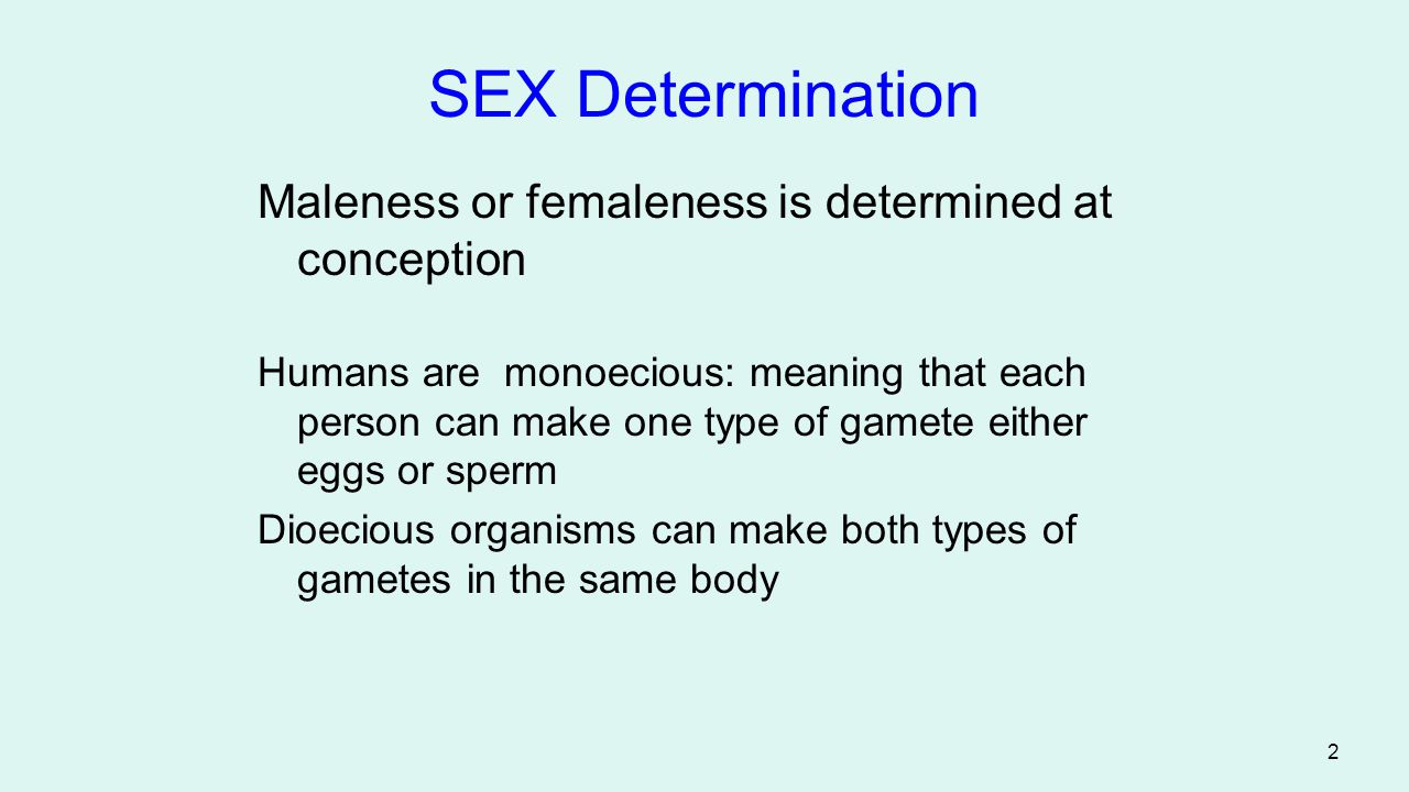 SEX Determination Maleness or femaleness is determined at conception