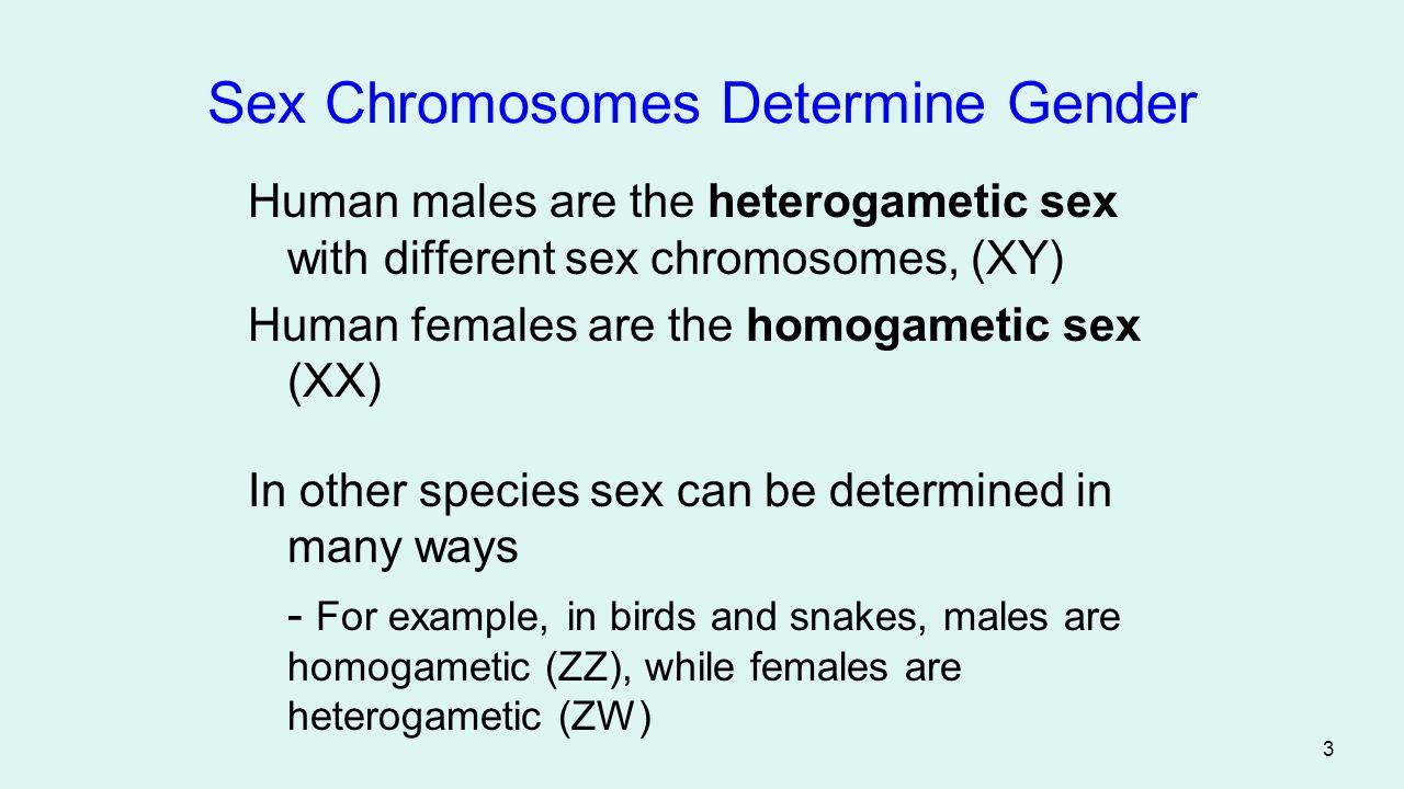 Sex Chromosomes Determine Gender