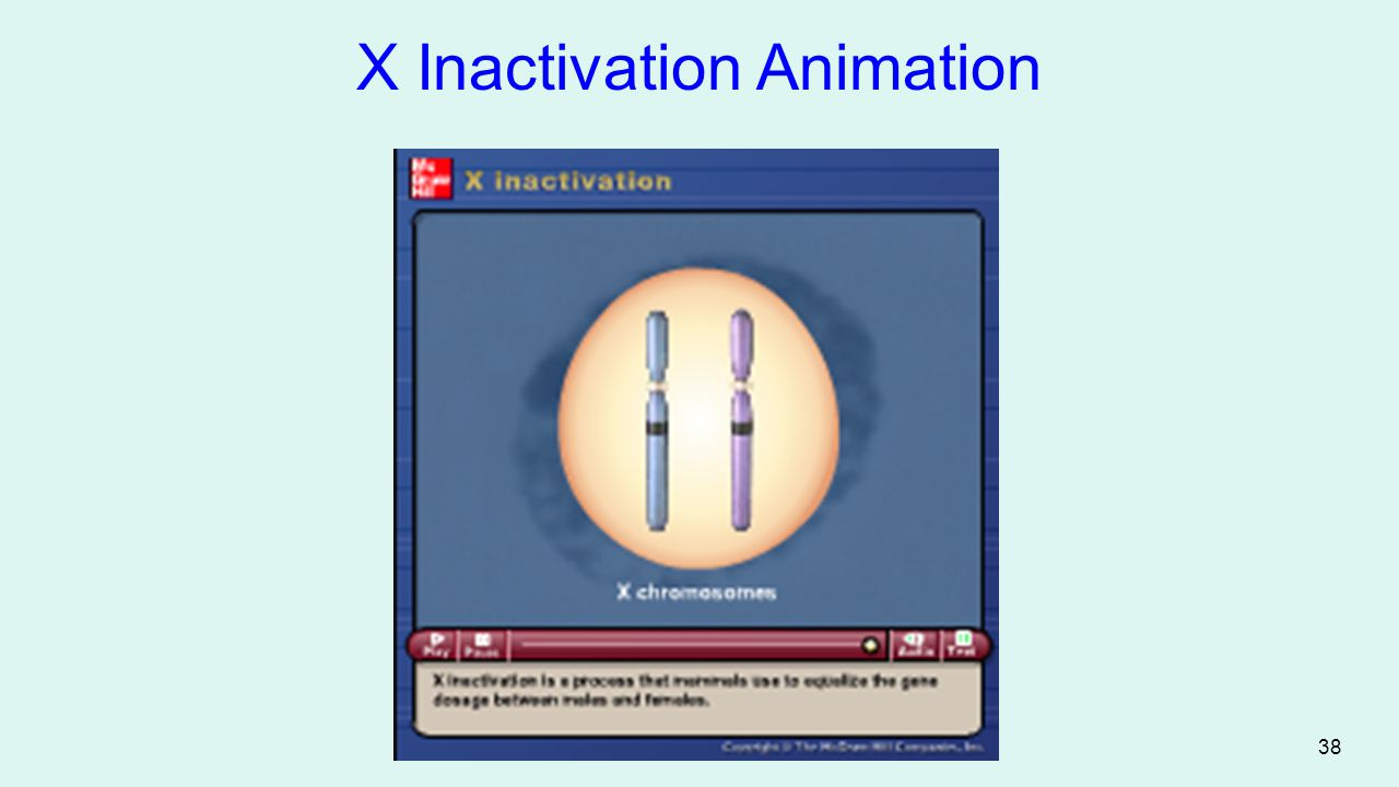 X Inactivation Animation