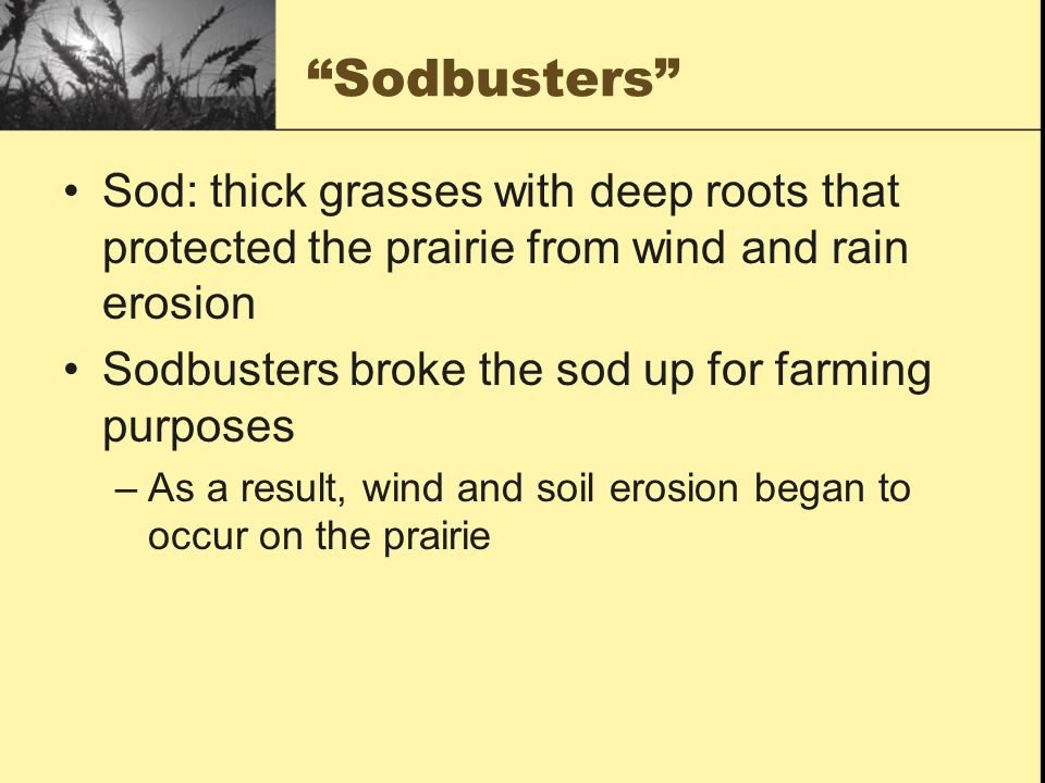 Sodbusters Sod: thick grasses with deep roots that protected the prairie from wind and rain erosion.