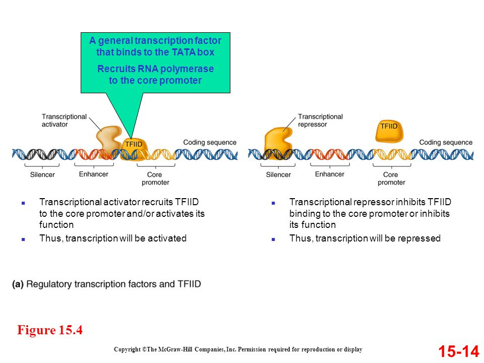 A general transcription factor that binds to the TATA box
