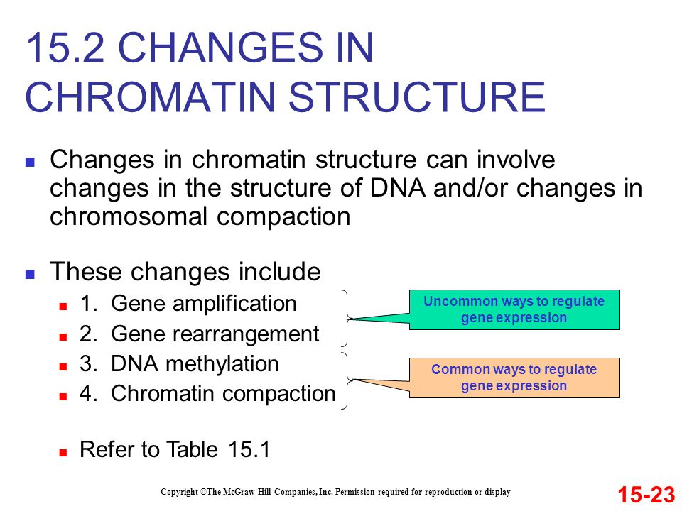 15.2 CHANGES IN CHROMATIN STRUCTURE
