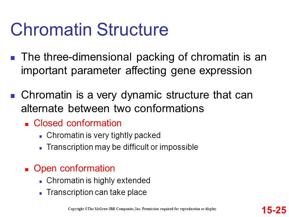 Chromatin Structure The three-dimensional packing of chromatin is an important parameter affecting gene expression.
