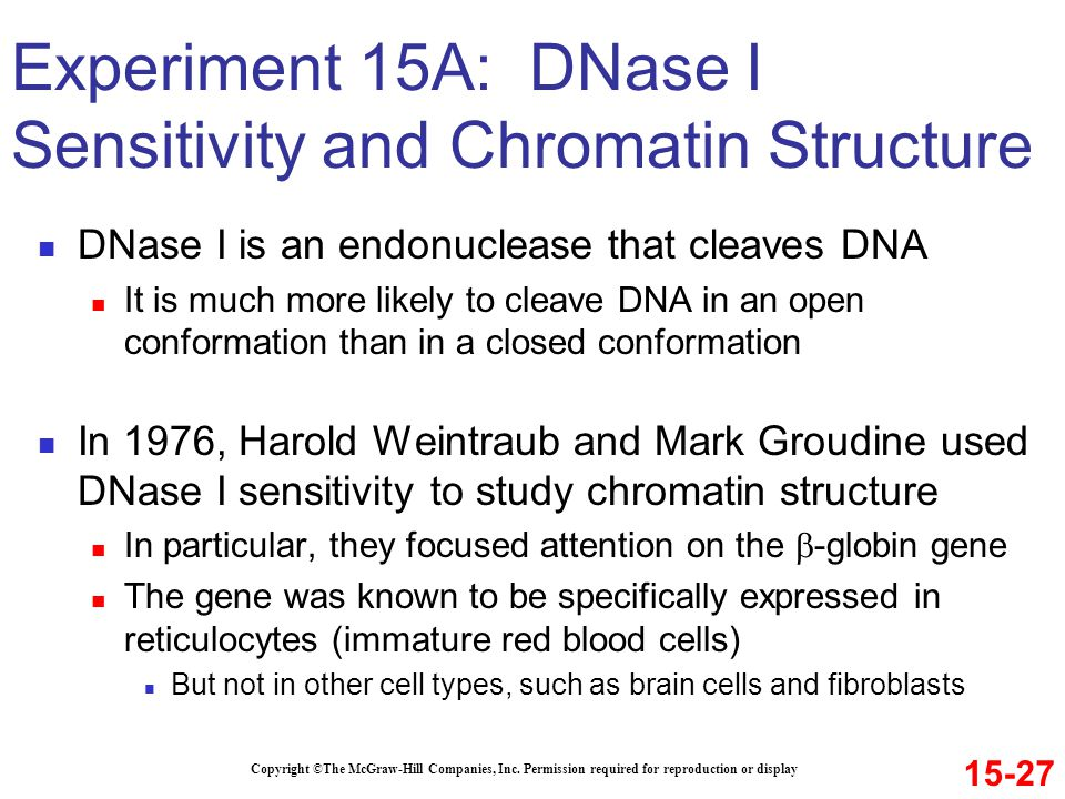 Experiment 15A: DNase I Sensitivity and Chromatin Structure