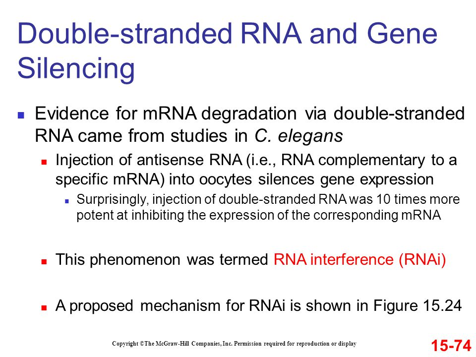 Double-stranded RNA and Gene Silencing