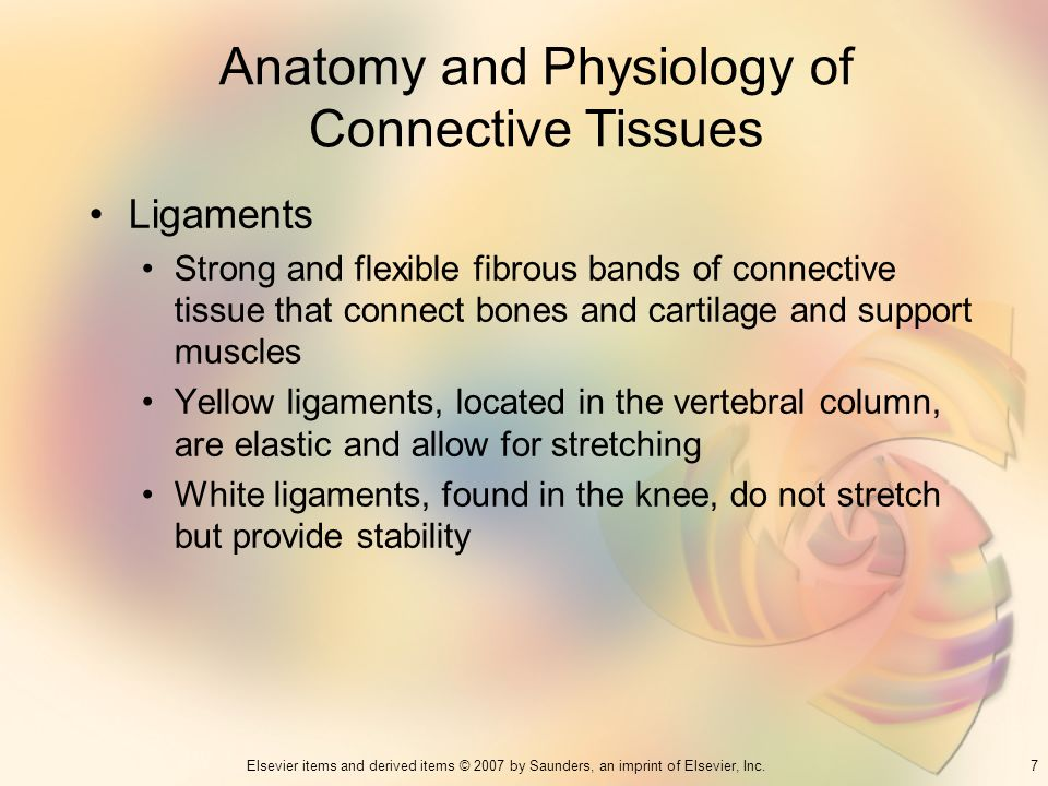 Anatomy and Physiology of Connective Tissues
