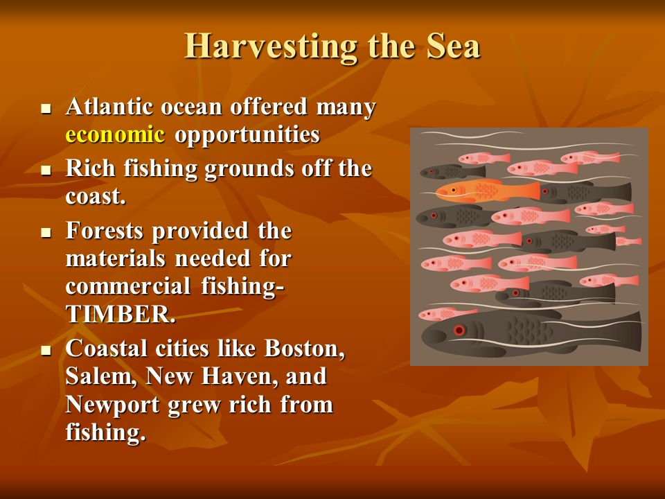 Harvesting the Sea Atlantic ocean offered many economic opportunities