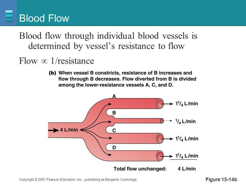 Blood Flow Blood flow through individual blood vessels is determined by vessel's resistance to flow.