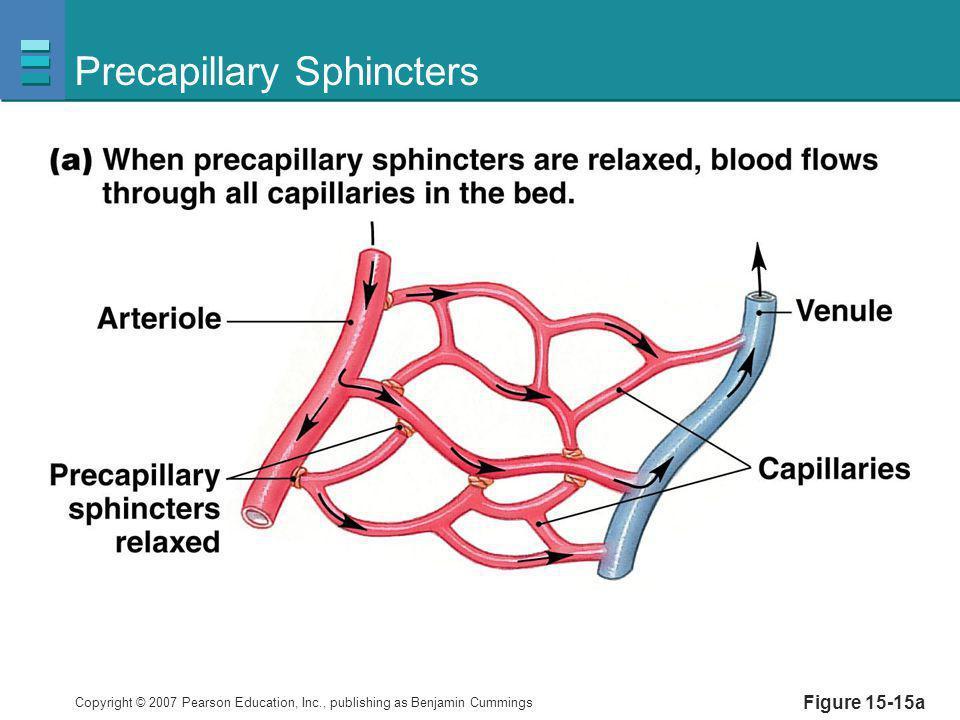 Precapillary Sphincters