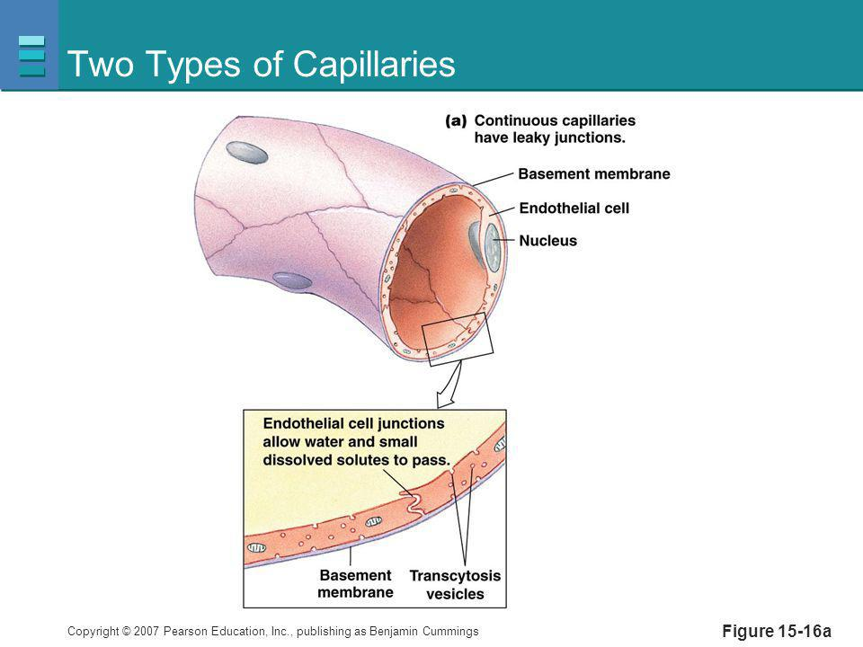 Two Types of Capillaries