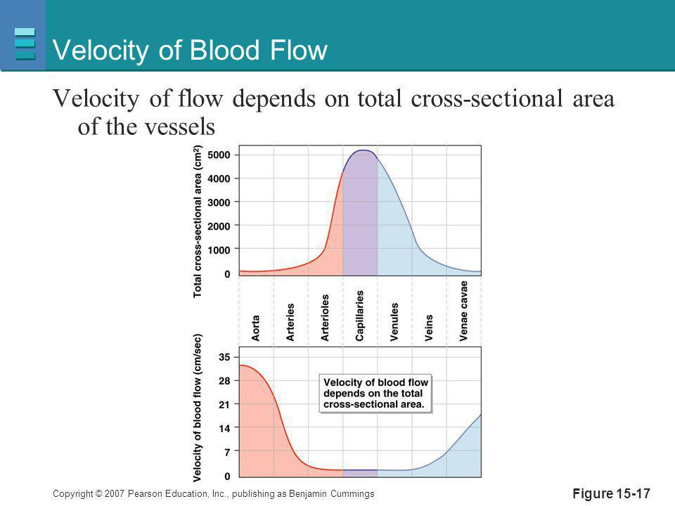 Velocity of Blood Flow Velocity of flow depends on total cross-sectional area of the vessels.
