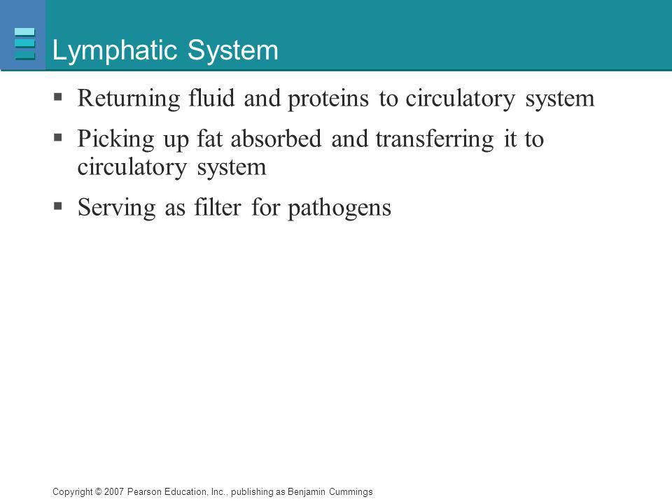 Lymphatic System Returning fluid and proteins to circulatory system