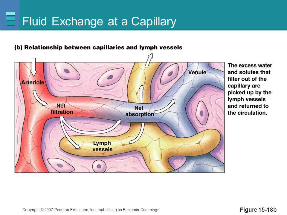 Fluid Exchange at a Capillary