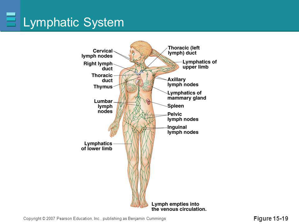 Lymphatic System Figure 15-19