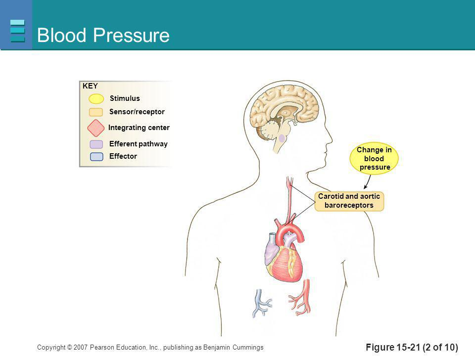 Blood Pressure Figure 15-21 (2 of 10) KEY Stimulus Sensor/receptor