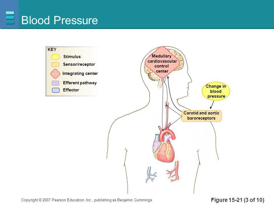 Blood Pressure Figure 15-21 (3 of 10) KEY Stimulus Medullary