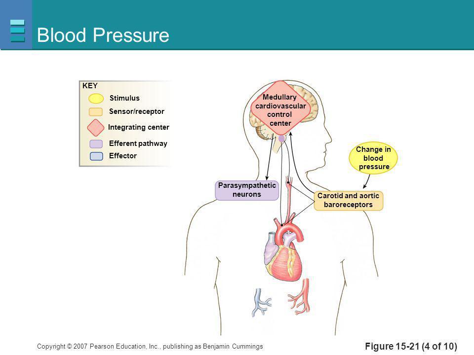 Blood Pressure Figure 15-21 (4 of 10) KEY Stimulus Medullary