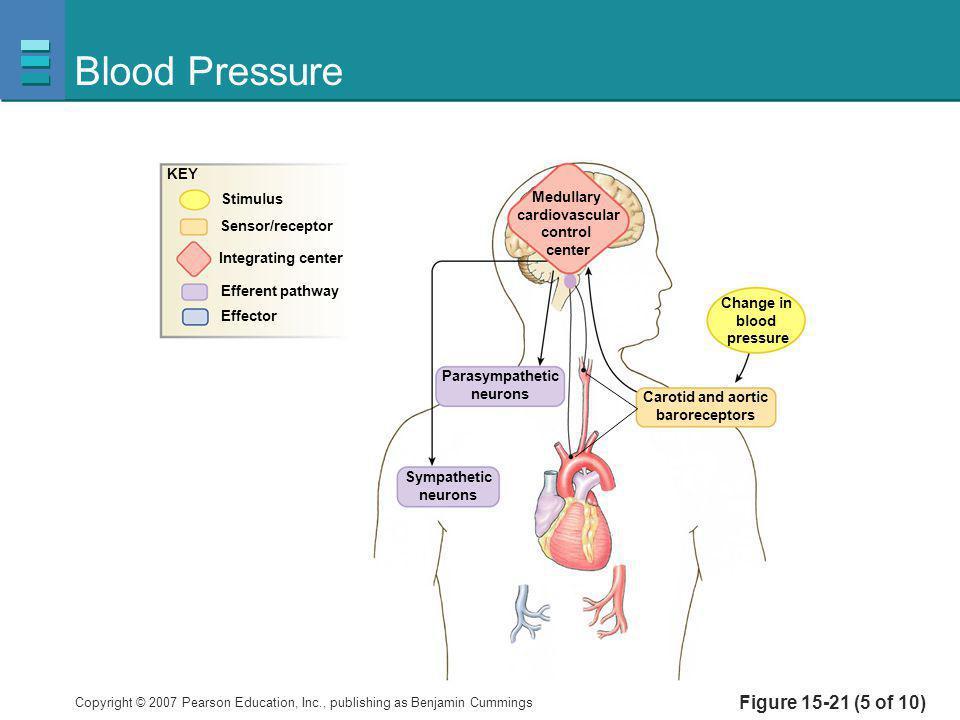 Blood Pressure Figure 15-21 (5 of 10) KEY Stimulus Medullary