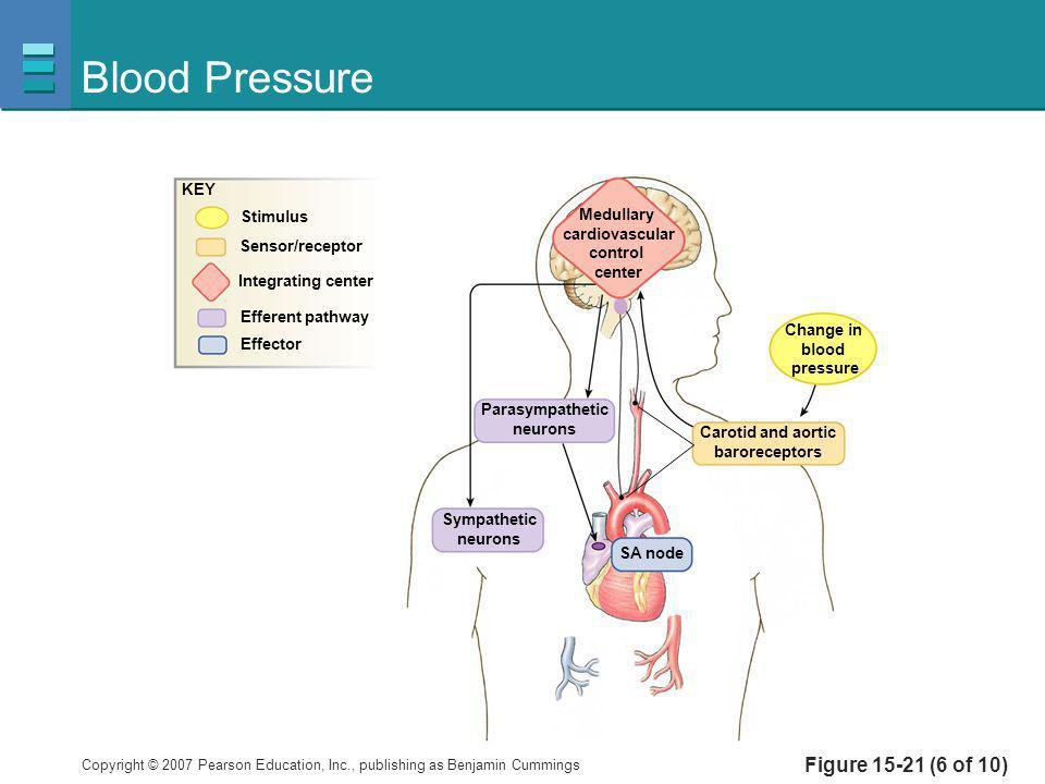 Blood Pressure Figure 15-21 (6 of 10) KEY Stimulus Medullary