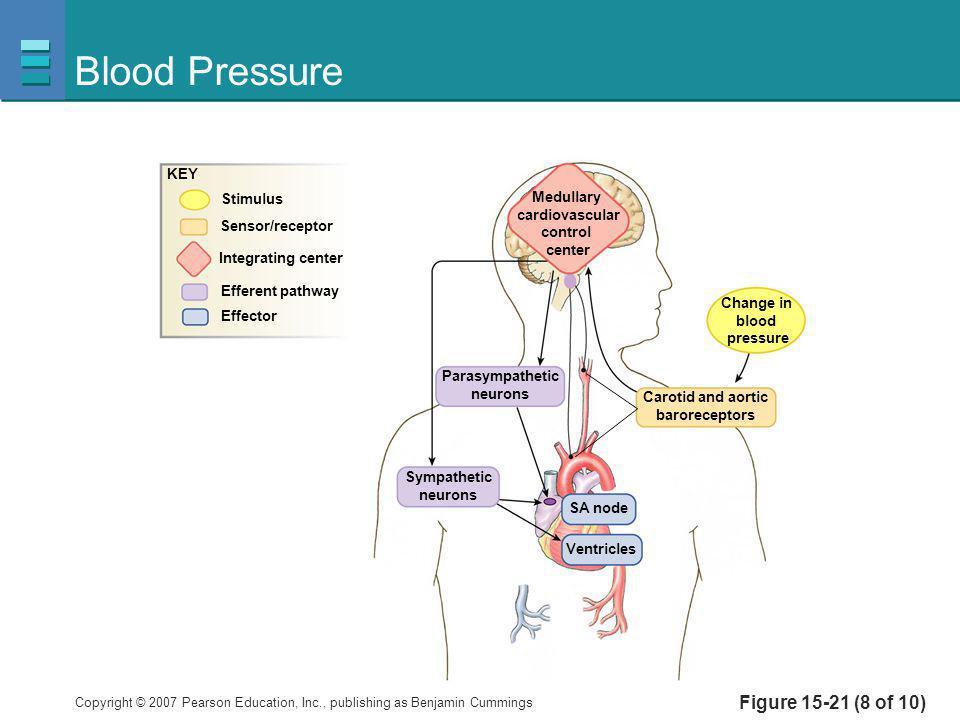 Blood Pressure Figure 15-21 (8 of 10) KEY Stimulus Medullary